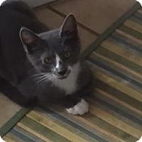 Adopt A Pet :: Tatum - Plymouth Meeting, PA