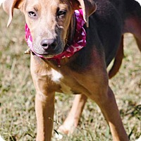 Adopt A Pet :: Bluebelle in CT - Manchester, CT