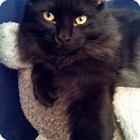 Adopt A Pet :: SmokeyBob - Little Rock, AR