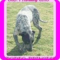 Adopt A Pet :: RODEO-Princess - Allentown, PA