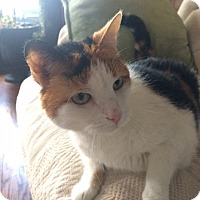 Adopt A Pet :: Isabelle - St. Louis, MO