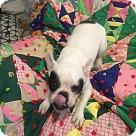 Adopt A Pet :: Eddy