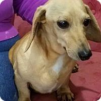 Adopt A Pet :: Creamora - Georgetown, KY