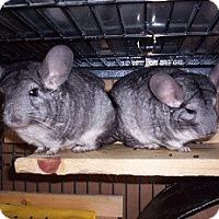 Adopt A Pet :: Bea & Rose - Avondale, LA