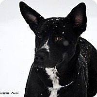 Adopt A Pet :: Suzy - PENDING, in Maine! - kennebunkport, ME