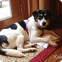 Adopt A Pet :: Kola-Prison Obedience Trained - Hazard, KY