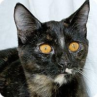 Adopt A Pet :: Jill V - Sacramento, CA