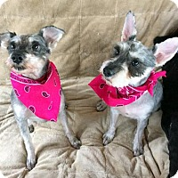 Adopt A Pet :: Sophia and Ava - White Bluff, TN