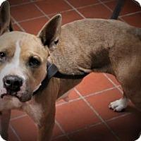 Adopt A Pet :: Molly - Daytona Beach, FL