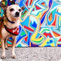 Adopt A Pet :: Finch - Redondo Beach, CA