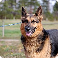 Adopt A Pet :: Gracey - Dacula, GA