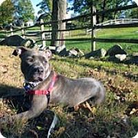Adopt A Pet :: Isis - Framingham, MA