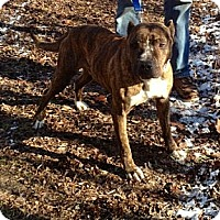 Adopt A Pet :: Butch - Chicago, IL