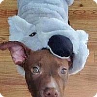Adopt A Pet :: Monkey - Dallas, GA