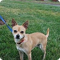 Adopt A Pet :: Rocky - Albany, NY