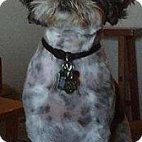 Adopt A Pet :: Denver - Denver, CO