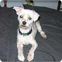 Adopt A Pet :: Jeffrey - Raleigh, NC