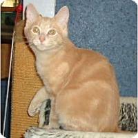 Adopt A Pet :: Gibbs - Elmira, ON