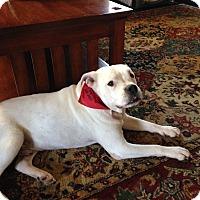 Adopt A Pet :: Blitzen - Conyers, GA