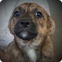 Adopt A Pet :: Trefoils - Evergreen, CO