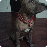 Adopt A Pet :: Ace - Montreal, QC