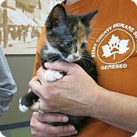 Adopt A Pet :: Alazay - Geneseo, IL