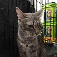 Adopt A Pet :: Ella - Amarillo, TX