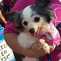 Adopt A Pet :: Delilah - Dallas, TX