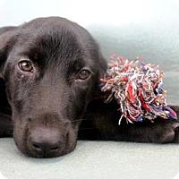 Adopt A Pet :: Hannah - New Orleans, LA