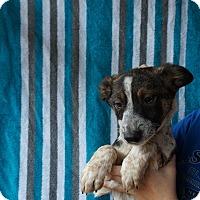 Adopt A Pet :: Mitz - Oviedo, FL
