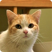Adopt A Pet :: Catsanova - Hastings, NE
