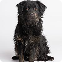 Adopt A Pet :: Dylan - Ogden, UT