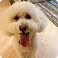 Adopt A Pet :: 'OLIVER' - Agoura Hills, CA