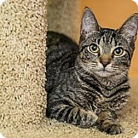 Adopt A Pet :: Canchita - Miami, FL