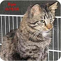 Adopt A Pet :: RYAN - AUSTIN, TX