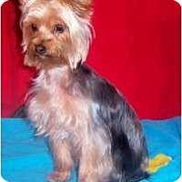 Adopt A Pet :: KAMEO - Rossford, OH