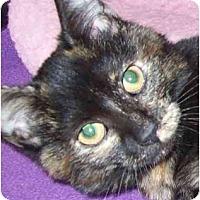 Adopt A Pet :: Lolita - Annapolis, MD