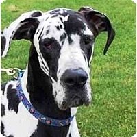 Adopt A Pet :: BULLWINKLE - Pearl River, NY