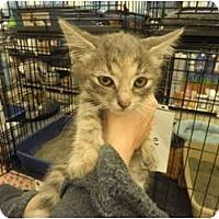 Adopt A Pet :: Abby - Warren, MI