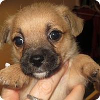 Adopt A Pet :: LESTER - Mission Viejo, CA