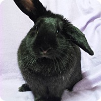 Adopt A Pet :: MJ - Williston, FL