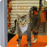 Adopt A Pet :: Lucy - Winter Haven, FL