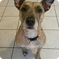 Adopt A Pet :: Cammie - Acushnet, MA