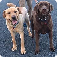 Adopt A Pet :: Latte - Huntsville, AL