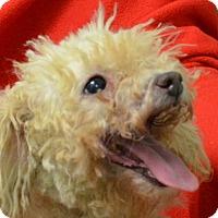 Adopt A Pet :: Lady - Erwin, TN
