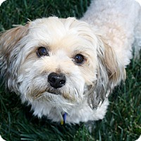 Adopt A Pet :: Pico - Bellflower, CA