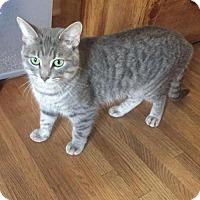 Adopt A Pet :: JASMINE - Gilberts, IL