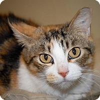 Adopt A Pet :: Callie - Wilmington, OH