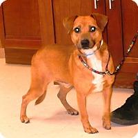 Adopt A Pet :: Eddie - Eastpoint, FL