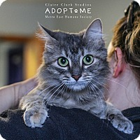 Adopt A Pet :: Sugar - Edwardsville, IL